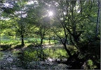 Woodland Scene,  Bradshaw Brook, The Jumbles, Bolton