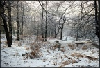 5.024a Winter Scene, Epping Forest