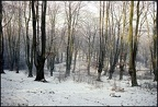 5.024b Winter Scene, Epping Forest