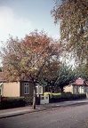 1.027 Autumn Colour, Clinton Crescent, Hainault